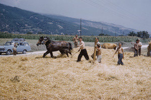 Threshing near Debar