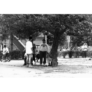 Young men conversing in the shade of a tree.