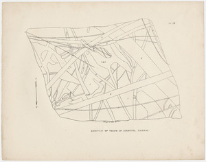 "Plate, ""Sketch of veins in sienite, Salem,"" 1841"