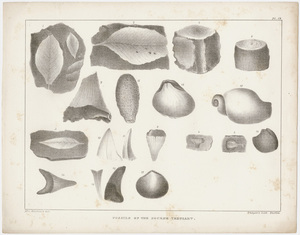 "Orra White Hitchcock plate, ""Fossils of the Eocene Tertiary,"" 1841"
