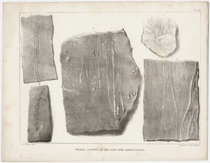 """J. Peckham plate, """"Fossil plants of the new red sandstone,"""" 1841"""