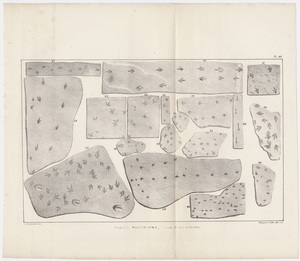 """J. Peckham plate, """"Fossil Footmarks, Scale 1/2 inch to the foot,"""" 1841"""