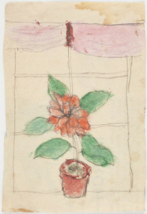 Drawing of plant with red flower
