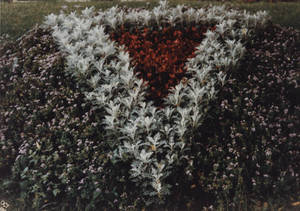 Arrangement of Flowers in the shape of the Springfield College triangle logo in Springfield College, ca. 1990