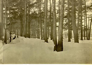 Winter storm at Springfield College, Nov. 1898