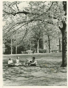 Four students sitting under a tree at Springfield College, ca. 1968