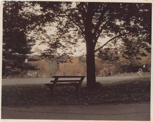 A bench on Springfield College Campus