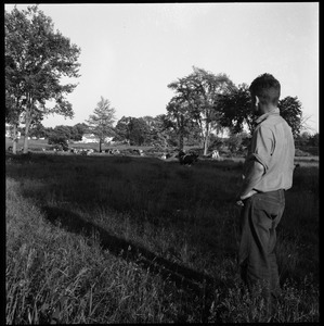 Man looking over a herd of cows at pasture, Wentworth Farm