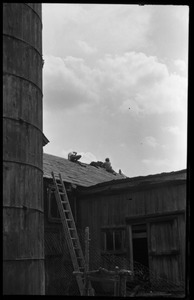 Roofing work on the barn, Montague Farm commune