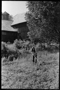 Hoeing in the garden near the barn, Montague Farm commune