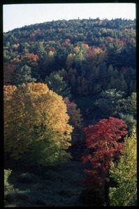 Autumn view of trees and hills, Montague Farm commune