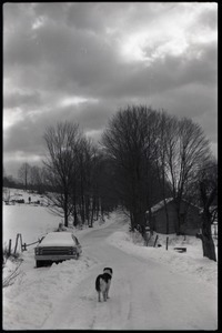 Dog and parked car on a snowy road, Montague Farm commune