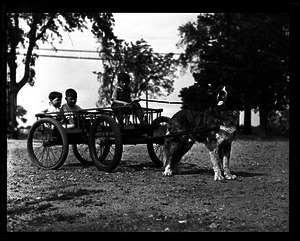 Dogs: children and dog cart