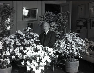 Ben Niseketm [sic], seated indoors among blooming azaleas in pots (P.P. 327 Commonwealth Avenue)
