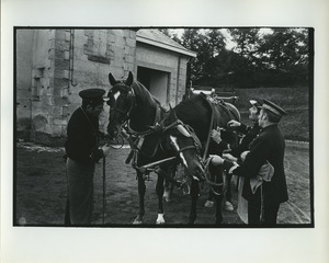 French carriage horses