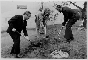 Randolph W. Bromery planting tree with two unidentified men