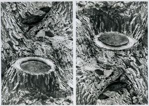 Branch stump (inverted diptych version)