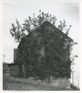 Barn and fruit