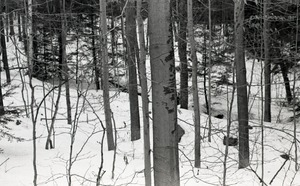 Tree trunks and stream in snow-covered woods