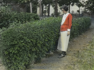 Acanthopanax (woman standing next to hedge)