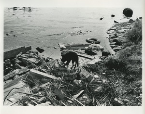 Dog by polluted waterway