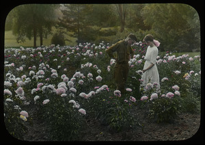 Young man and woman in a large peony garden