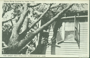 House being crushed by falling trees : the Great New England Hurricane of 1938