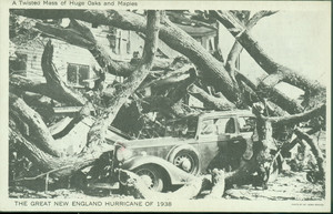 A twisted mass of huge oaks and maples : the Great New England Hurricane of 1938