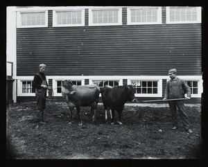 Two men and cows in front of a farm building, location unknown, undated