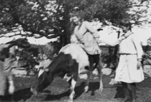 Girl riding a cow, location unknown, ca. 1900