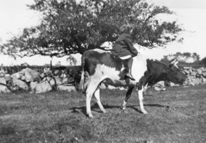 Girl riding a cow, location unknown, undated