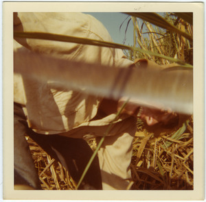 Jamie Lasalle cutting cane (close-up)