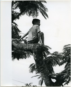 Child sitting in a tree
