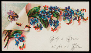 Sample card for lily & rose pack, location unknown, undated