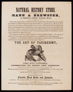 Natural History Store, taxidermy, Mann & Brewster, 16 Tremont Street, Boston, Mass., undated