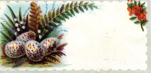 Blank trade card with speckled eggs, ferns and flowers