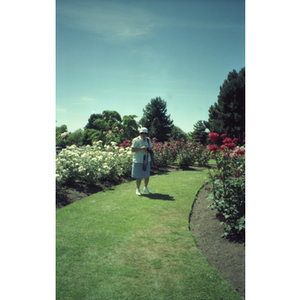 Chinese Progressive Association member holds a camera and stands on a grassy pathway through a rose garden
