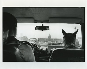 Driver and dog in car in Paris
