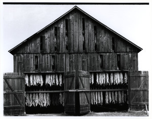 Tobacco barn end on
