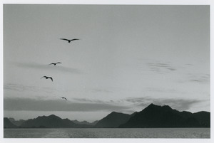 4 birds over coastal mountains