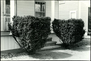 Winterized shrubs