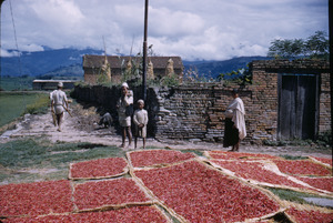 Chiles drying in Nepal