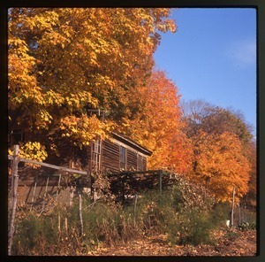 House and arbor in fall color, Montague Farm Commune