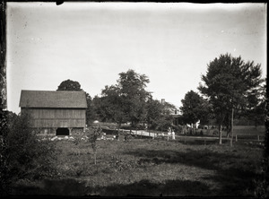Barn and cattle, across the road from unidentified house (Greenwich, Mass.)