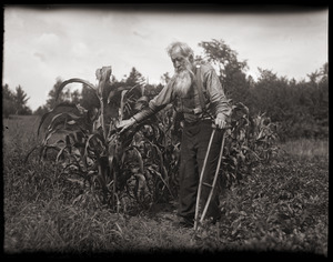 Amos Chase, standing near corn