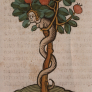 Serpent in a tree