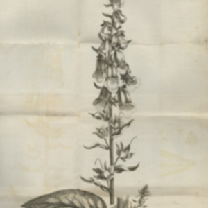 An account of the foxglove