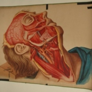 Teaching watercolor of man with surgically dissected face and neck, 1848-1854