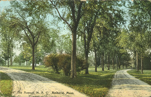The Avenue, M.A.C., Amherst, Mass.