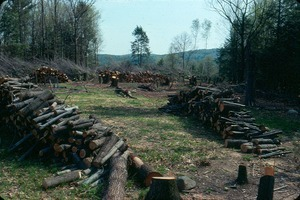 Woodpile: The Lodge was heated by a wood furnace